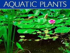 aquadic plants