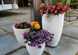 Flower pot and rocks 3